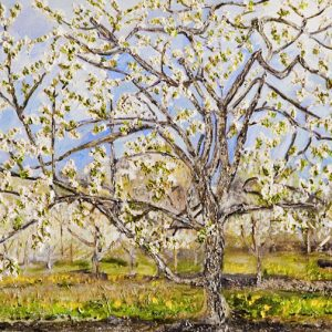 Blooming Cherry Tree - oil on canvas; 18 x 24 inches; ©1999