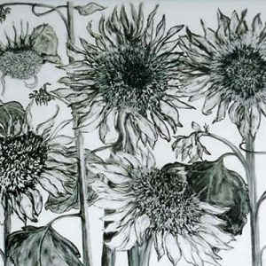 Sunflower Faces; charcoal, graphite, conte on paper; 22 x 30 inches; ©2004