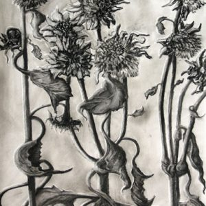 "Sunflowers 1 - charcoal on paper; 21 x 15-1/2"" - SOLD"
